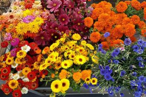 assorted flowers