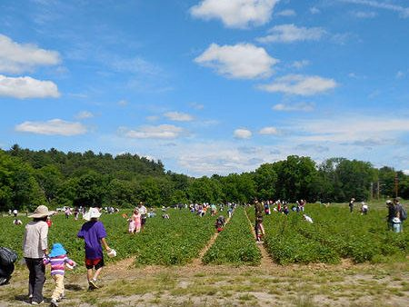 strawberryfest2014-2
