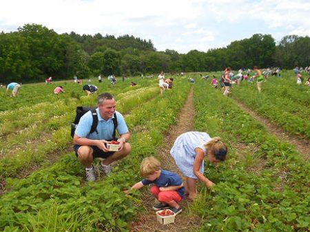 strawberryfest2015-1